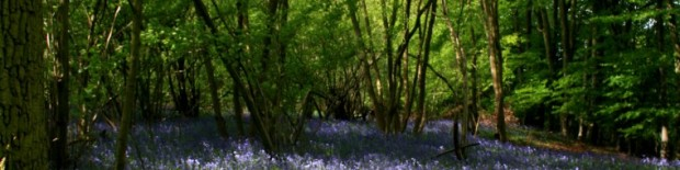 cropped-ancient-woodland-cropped.jpg